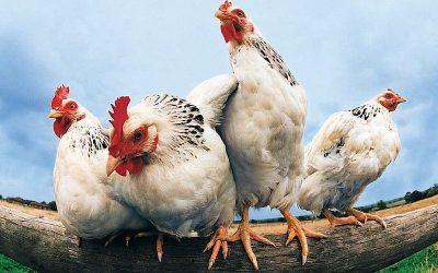 I 3 Motivi del perchè l'analisi grafica è per i polli